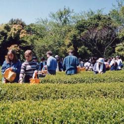 1995-April-Muroto-12